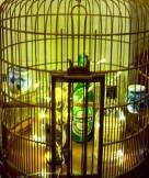 THE BIRDCAGE - detail